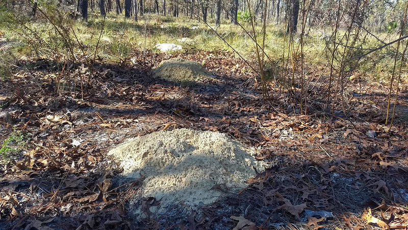 Big orange mounds of sand under pines