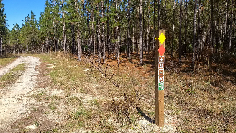 Trail markers along forest road