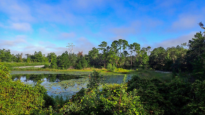 View across sinkhole pond with early morning light