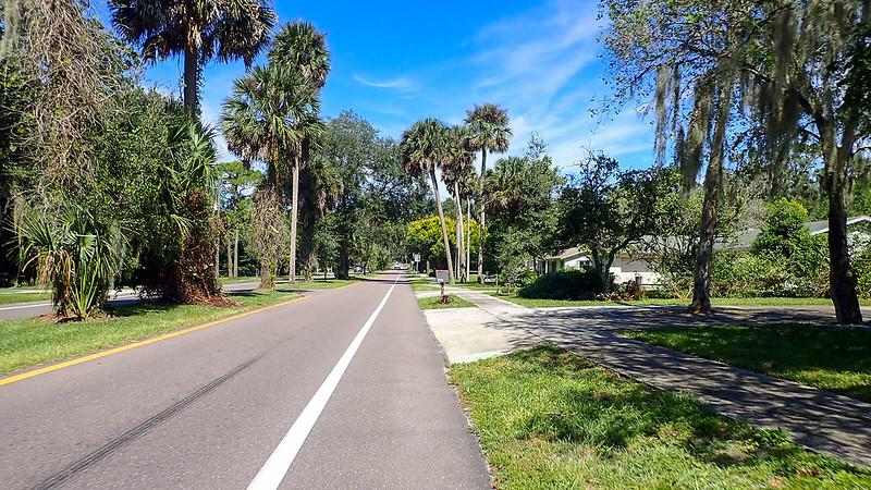 Bike lane with palm trees