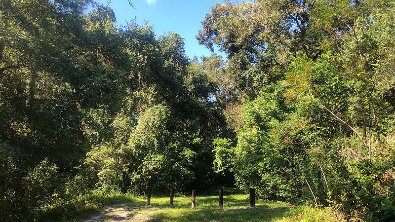 Posts across grassy gap in woods