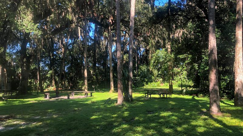Campground under oaks
