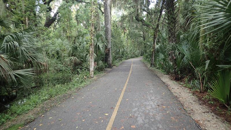 Bike path through palms and oaks