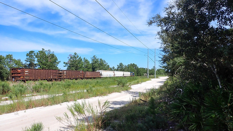 Small freight train on tracks in woods