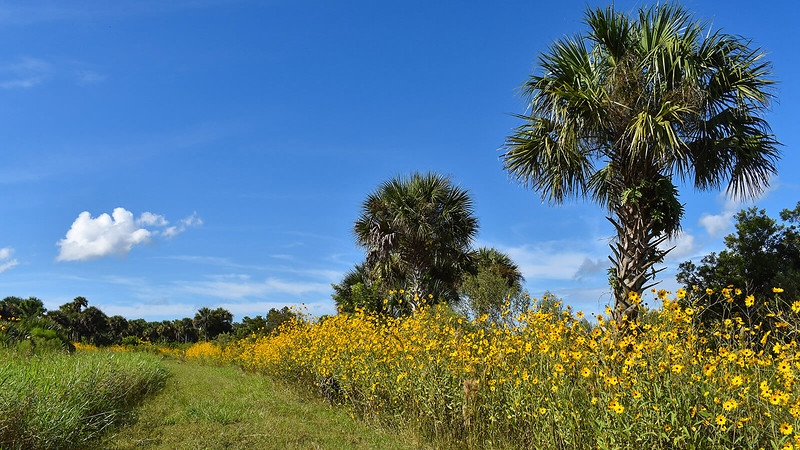Sunflowers and palms