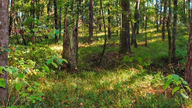 Grassy slope forest