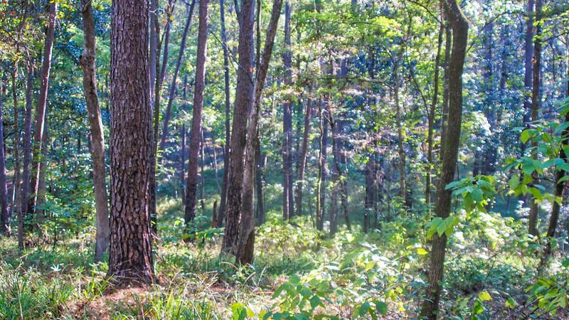 Slope forest above Lake Seminole