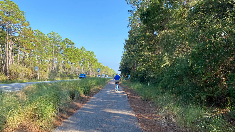 Cyclist on bike path along pine forest