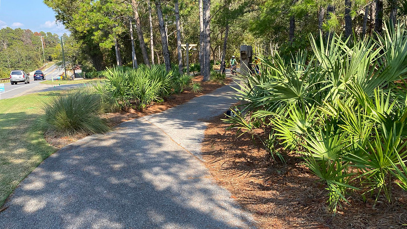 Riding towards cyclists in pine forest