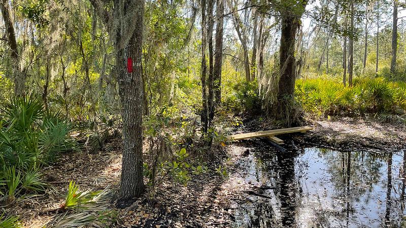 Plank across stream