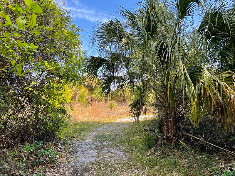 Trail curving past palm into open area