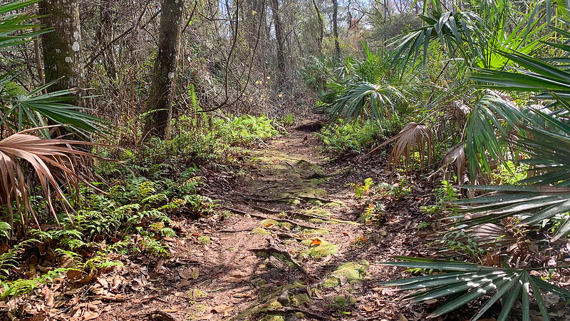 Footpath with moss and roots