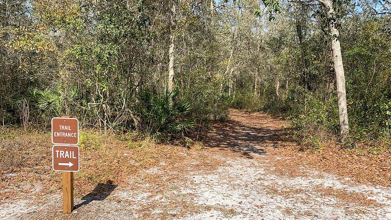 Footpath into scrub forest