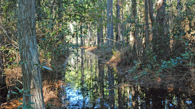 Wet trail in cypress