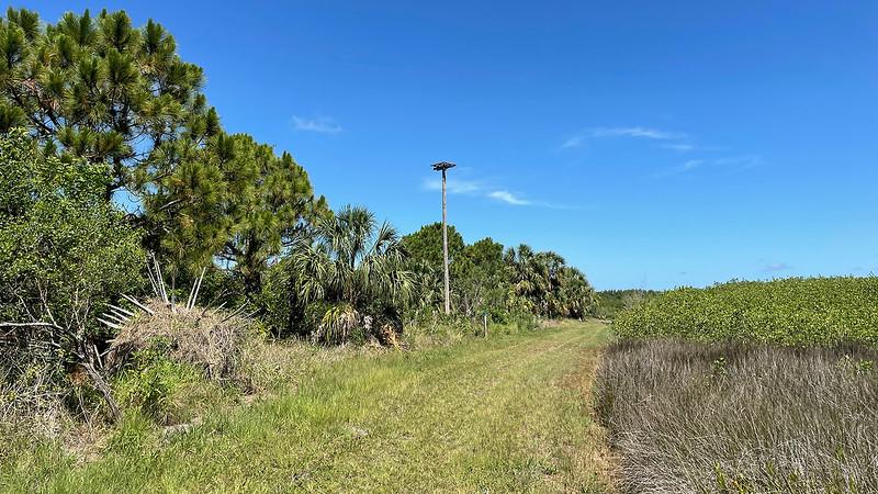 Osprey pole above trail