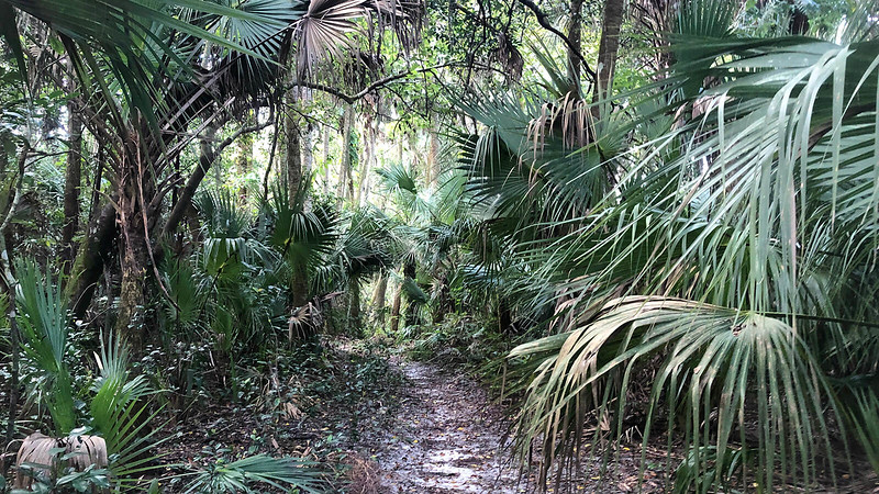 Sandy trail under palm fronds