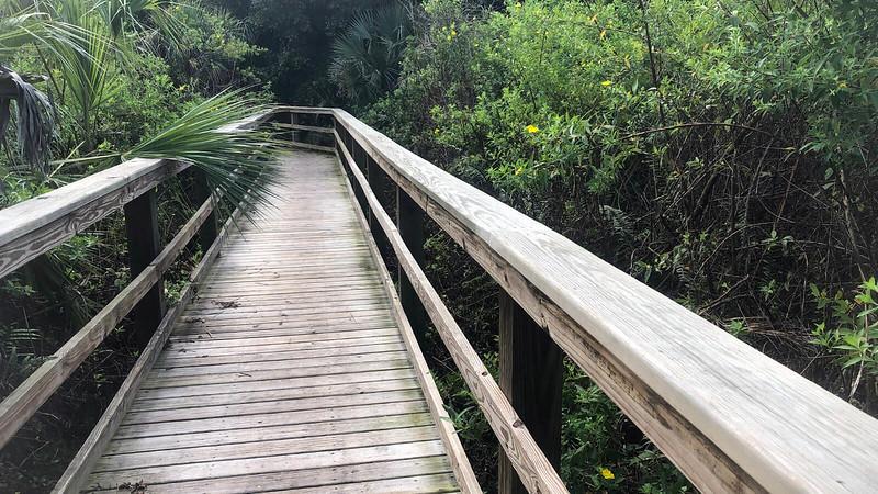 Boardwalk into forest