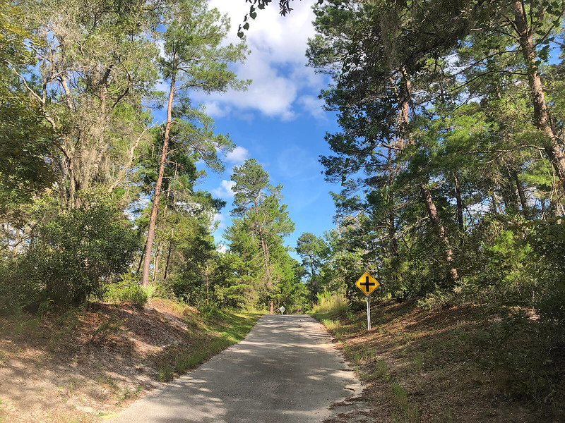 Looking uphill in pine forest