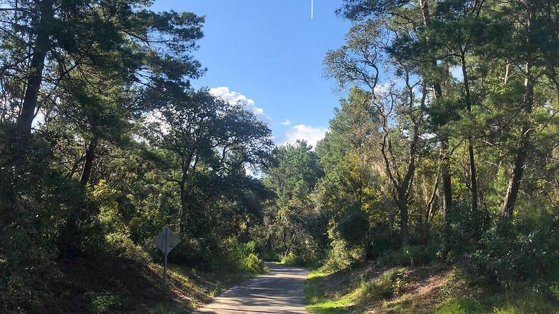 Path downhill through pines