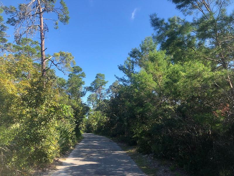 Paved path through pines