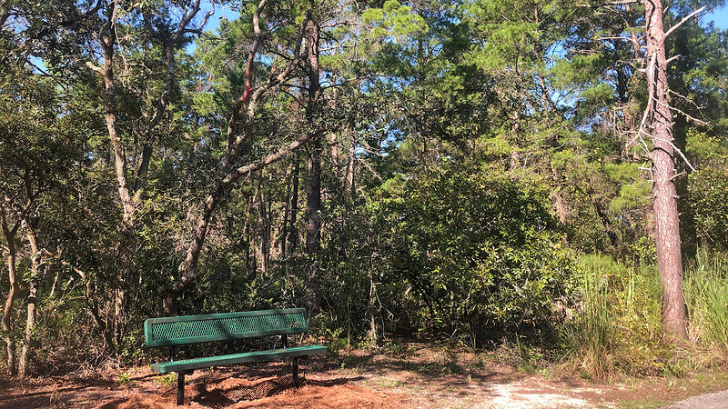 Bench under pines