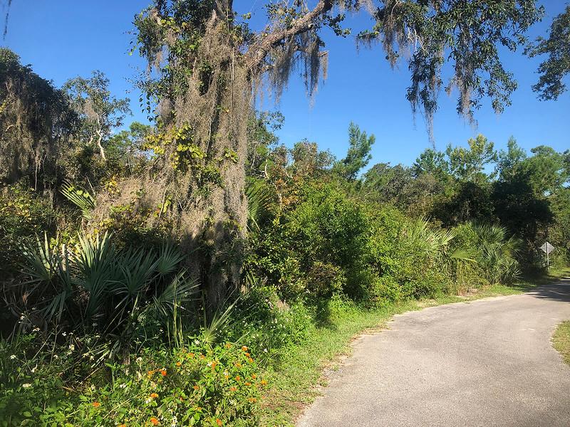 Lantana along paved trail