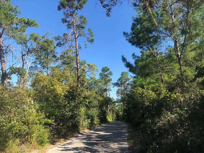 Dense sand pine scrub along paved trail