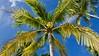 Drop Anchor Resort, Islamorada, FL