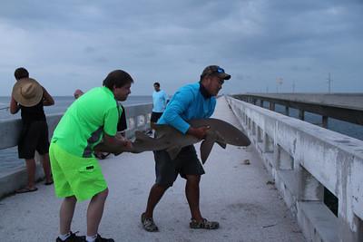 Shark on Bridge
