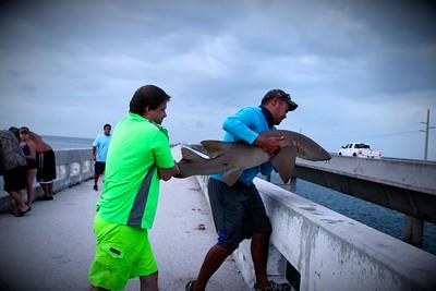 Shark on pier
