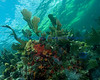 Reef scene on North North, Key Largo