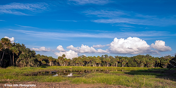 Pond. Myakka River State Park.