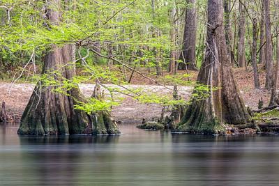 O'Leno State Park, Florida