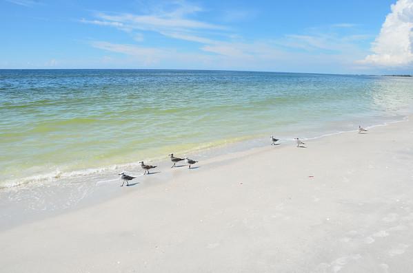 Seagulls - Gasparilla Island