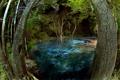 The Main Spring at Ginnie Springs in High Springs, Florida captured by photographer Jill Heinerth in a quiet moment between cave dives.