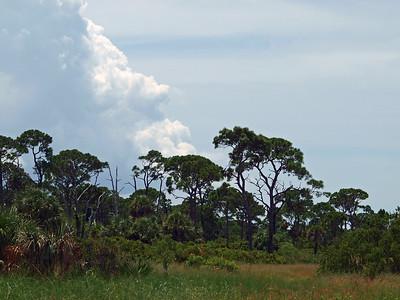 Honeymoon Island, FL