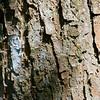 Six Mile Cypress Slough