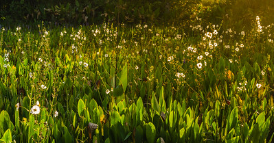 Morning sun falls on the plant life at Wakodahatchee Wetlands in Delray Beach on Wednesday, October 11, 2017. (Joseph Forzano / Deep Creek Films & Photography)