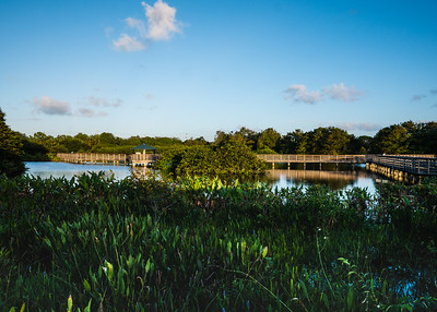 A quiet morning at  Wakodahatchee Wetlands in Delray Beach on Wednesday, October 11, 2017. (Joseph Forzano / Deep Creek Films & Photography)