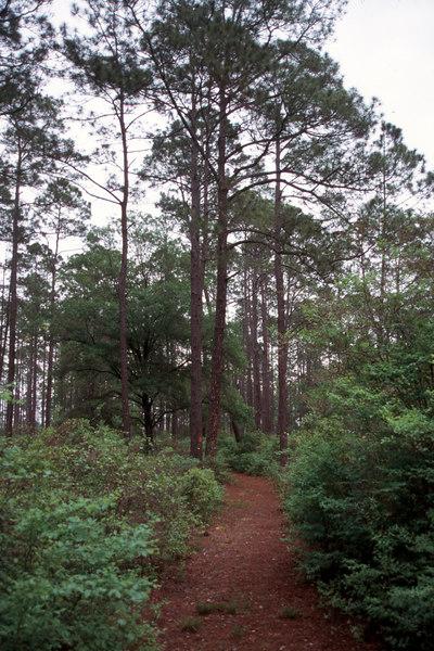 Florida Trail at Vilas<br /> PHOTO CREDIT: Sandra Friend / Florida Trail Association