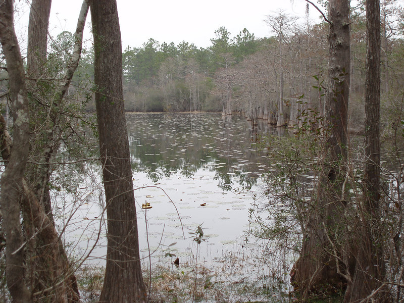 Bonnet Pond         <br /> PHOTO CREDIT: Bob Coveney / Florida Trail Association