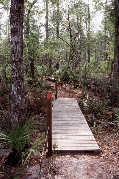 Florida Trail along the Soppchoppy section<br /> PHOTO CREDIT: Sandra Friend / Florida Trail Association
