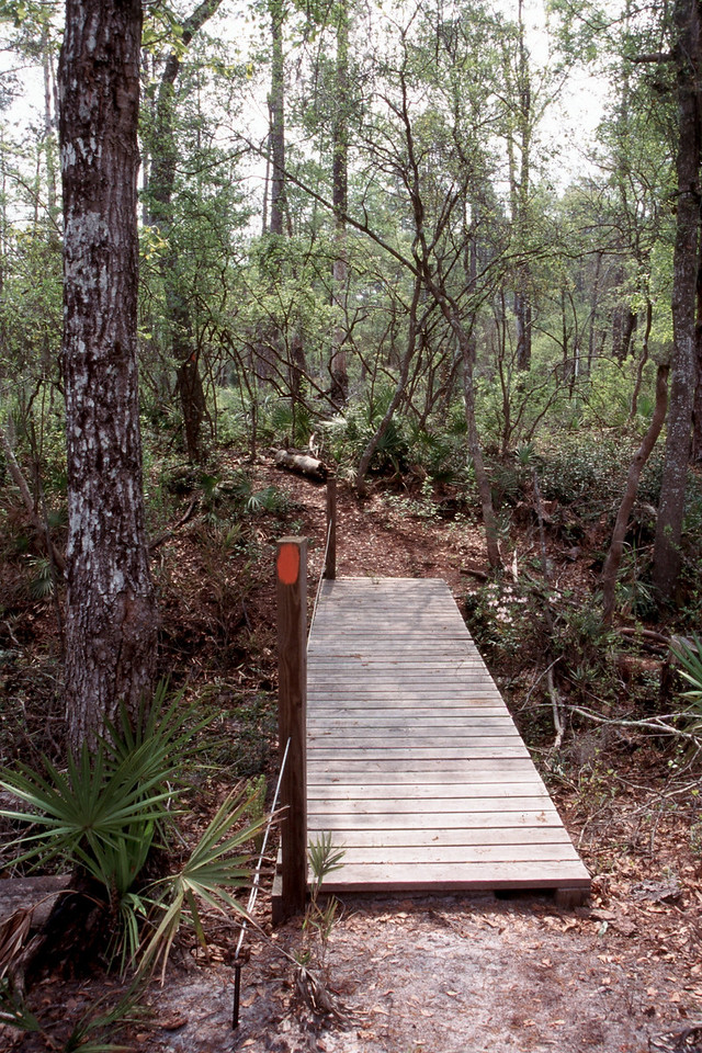Florida Trail along the Soppchoppy section<br /> PHOTO CREDIT: Sandra Friend / Florida Trail Association