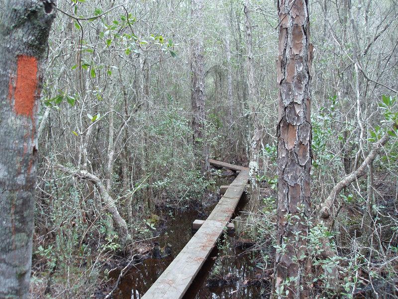 Boardwalk through titi swamp       <br /> PHOTO CREDIT: Bob Coveney / Florida Trail Association