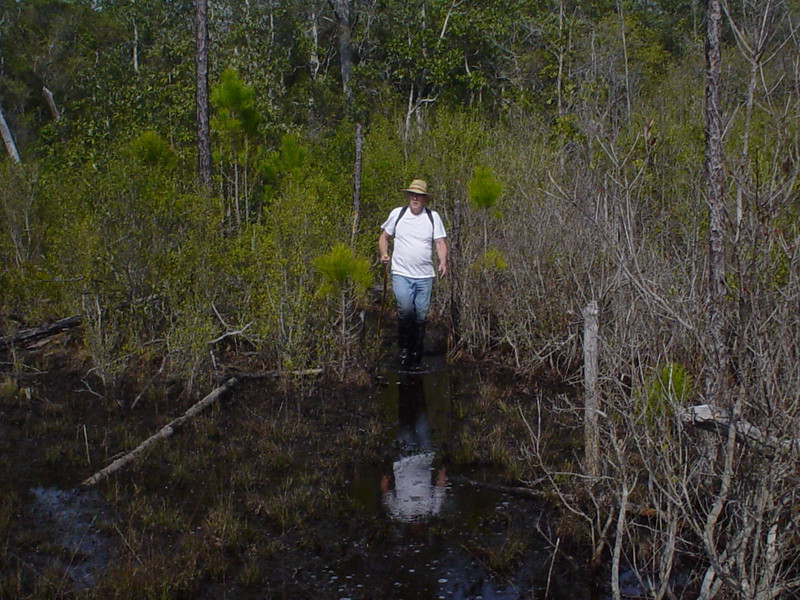 Hiker on the Bradwell Bay Swamp Tromp<br /> PHOTO CREDIT: Kent Wimmer / Florida Trail Association