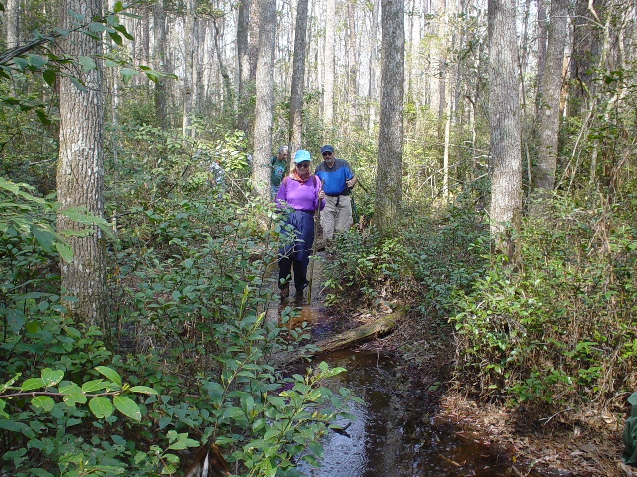 Hikers on the Bradwell Bay Swamp Tromp<br /> PHOTO CREDIT: Kent Wimmer / Florida Trail Association