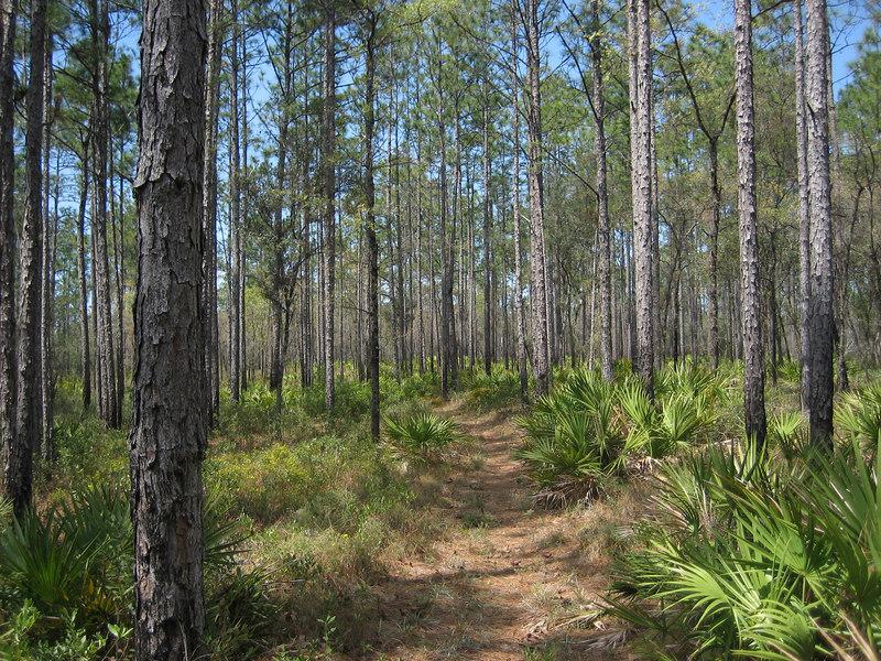 Florida Trail near Camel Lake<br /> PHOTO CREDIT: Sandra Friend / Florida Trail Association