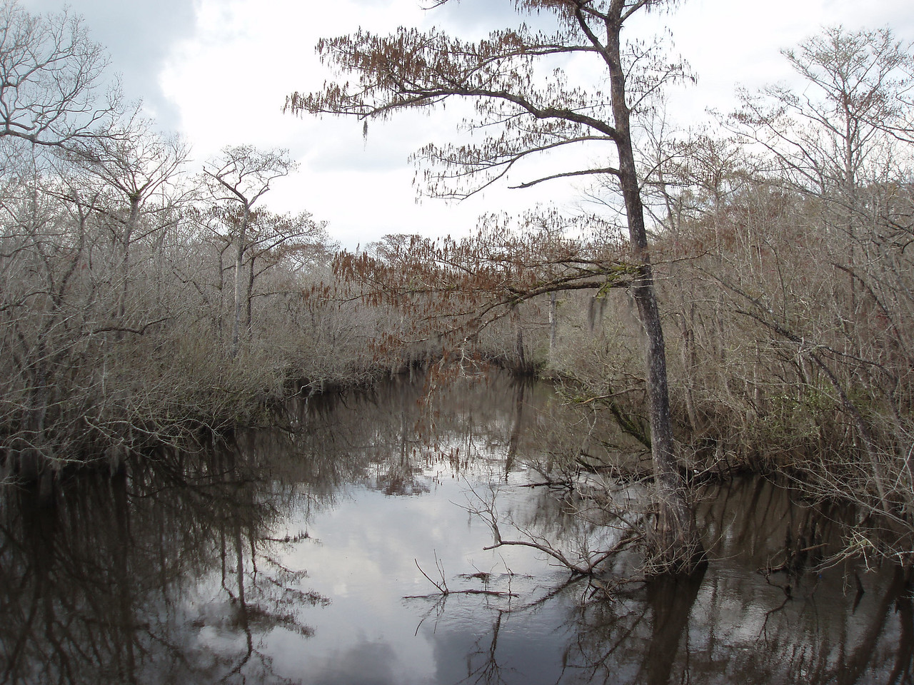 Ochlocknee River in winter<br /> PHOTO CREDIT: Robert Coveney / Florida Trail Association