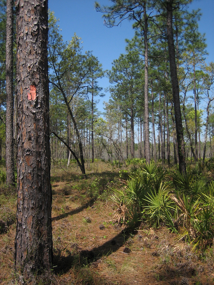 Along the Florida Trail near Camel Lake<br /> PHOTO CREDIT: Sandra Friend / Florida Trail Association