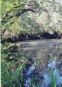 Aucilla River sink<br /> PHOTO CREDIT: Sandra Friend
